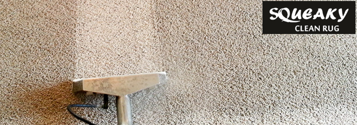 Remove Black Mold with Carpet Cleaning Services