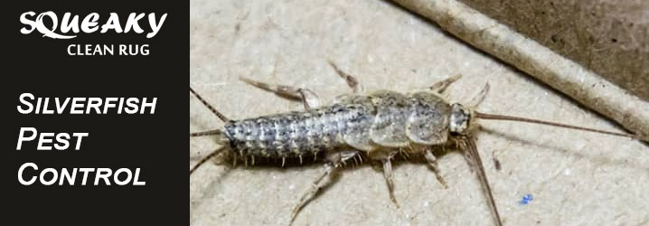 5 Silverfish Infestation Signs to Watch Out For