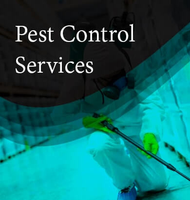 Pest Control Launceston