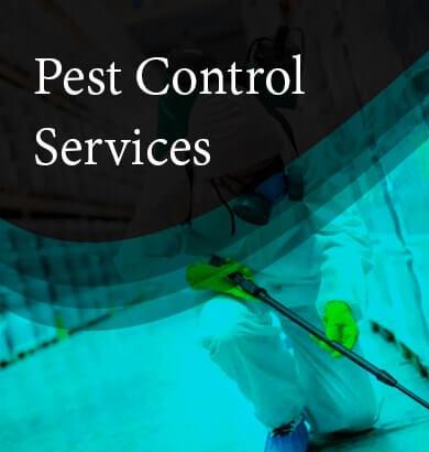Pest Control Launceston