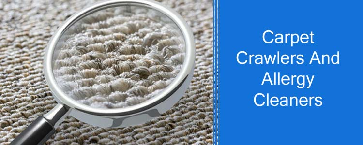 Carpet Crawlers and Allergy Cleaners