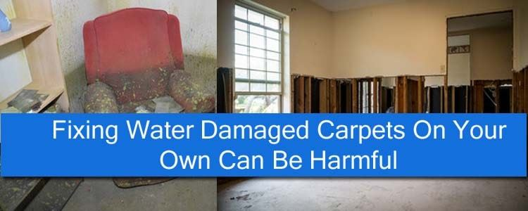 Fixing Water Damaged Carpets On Your Own Can Be Harmful