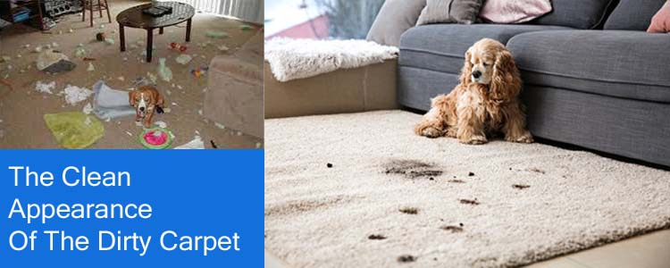 The Clean Appearance Of The Dirty Carpets