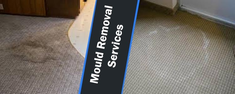 Mould Removal Services