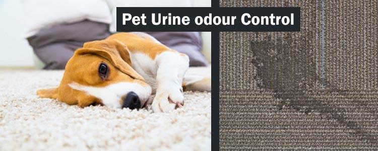 Pet Urine Odour Control Service